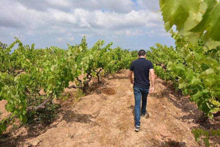 Visita les nostres vinyes, el celler més tast de vins